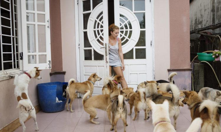 Vietnam rescue dogs