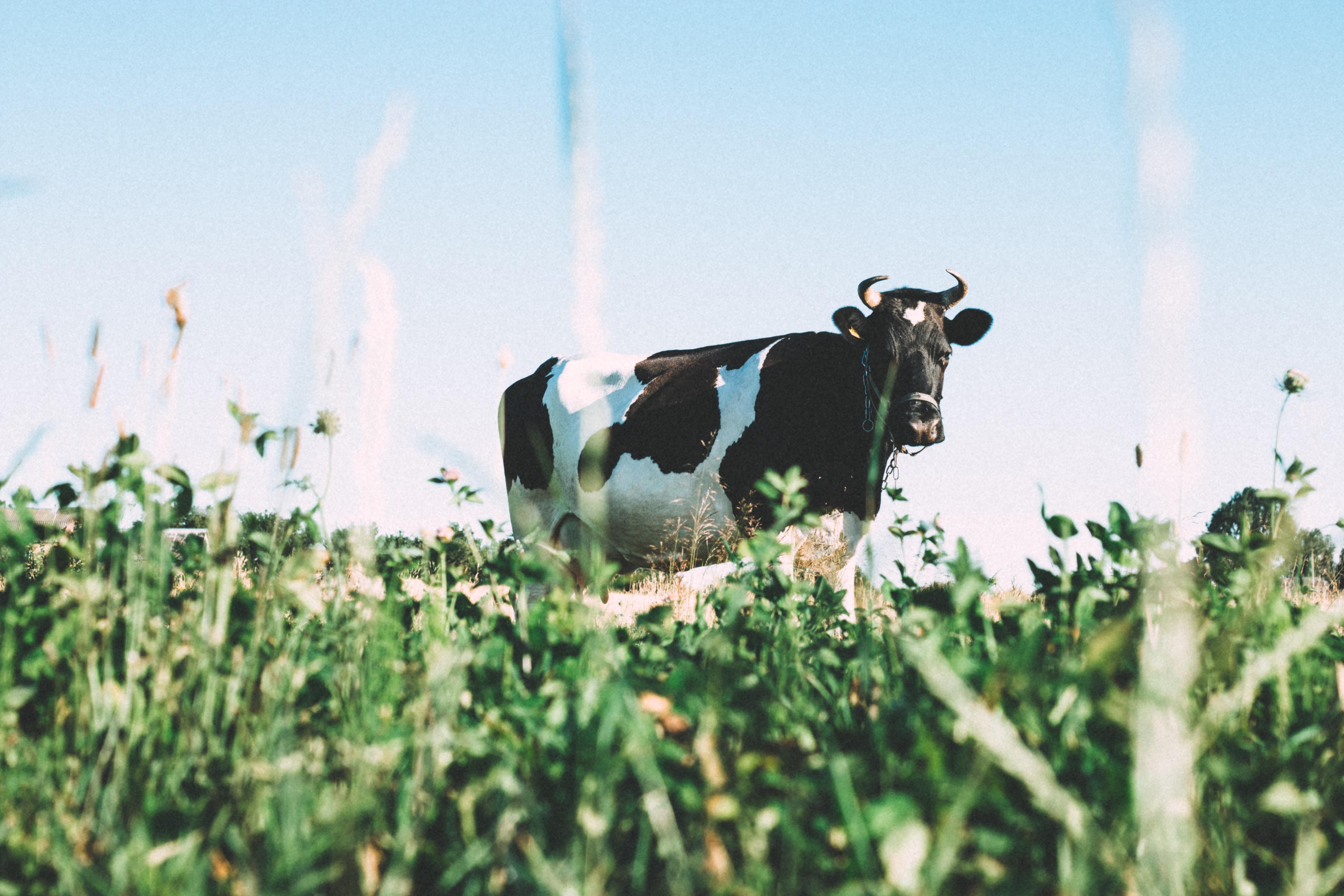 dairy free vegan milk